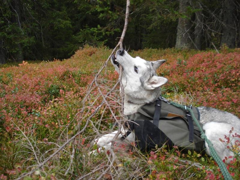 Liker oss i skogen