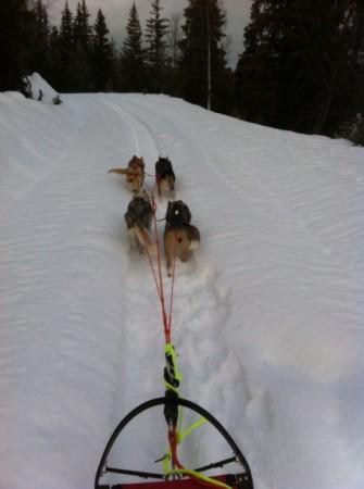 firespann bestående av Tussi, Runner, Nala og Zarya på en kort tur på Åstbru