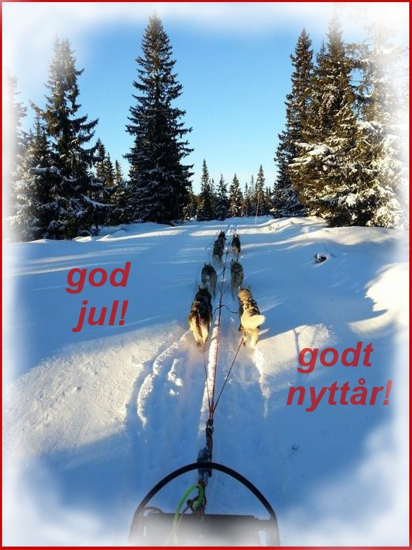 God jul og godt nyttår! Hilsen to- og firbente på Harestua