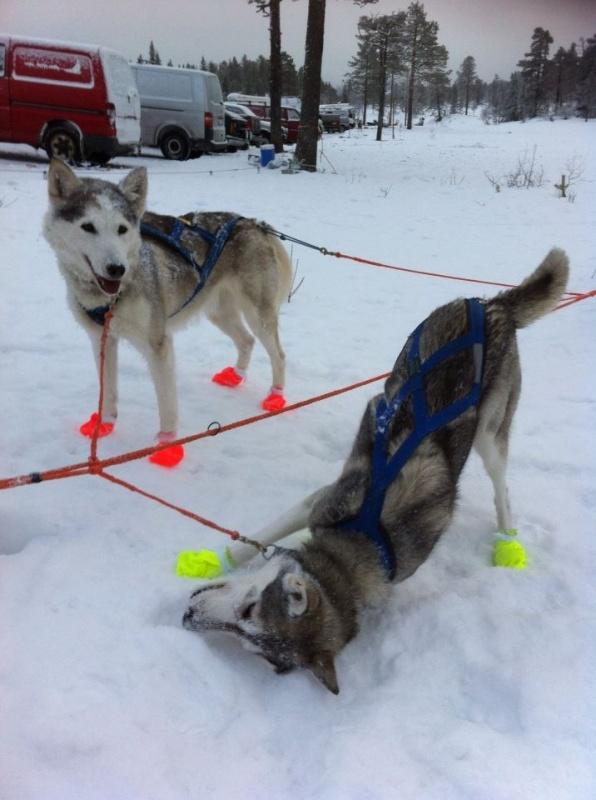 Gill og Libby etter løpet. Hurra for snø :)