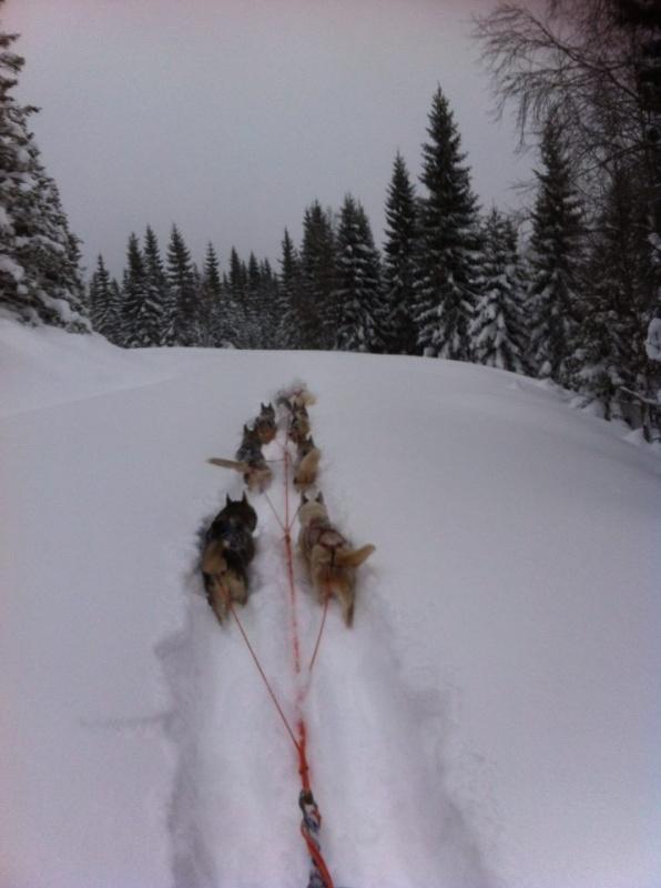 Brøyting på hadelandsrunden- i opp til 50 cm snø. Dolly og Zima i led