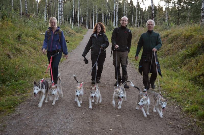 Seks av valpene fra Alnitak-kullet på tur med lokallaget til NSHK. Foto EIW
