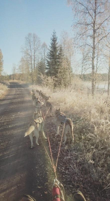Treningstur i 4 minusgrader med rimfrost