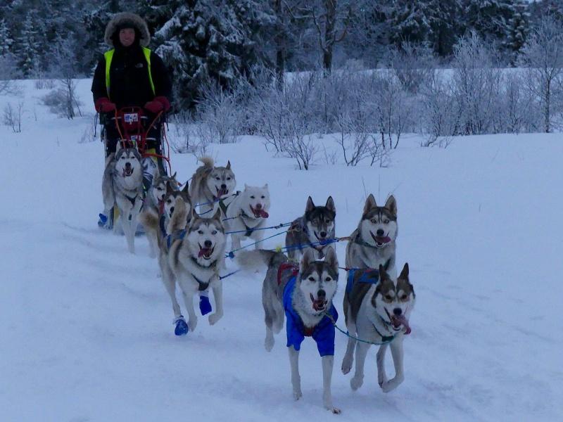 Blide hunder på treningstur, med antignagsår t-skjorte og sokker for å unngå problemer. Foto: Viggo Jørgensen